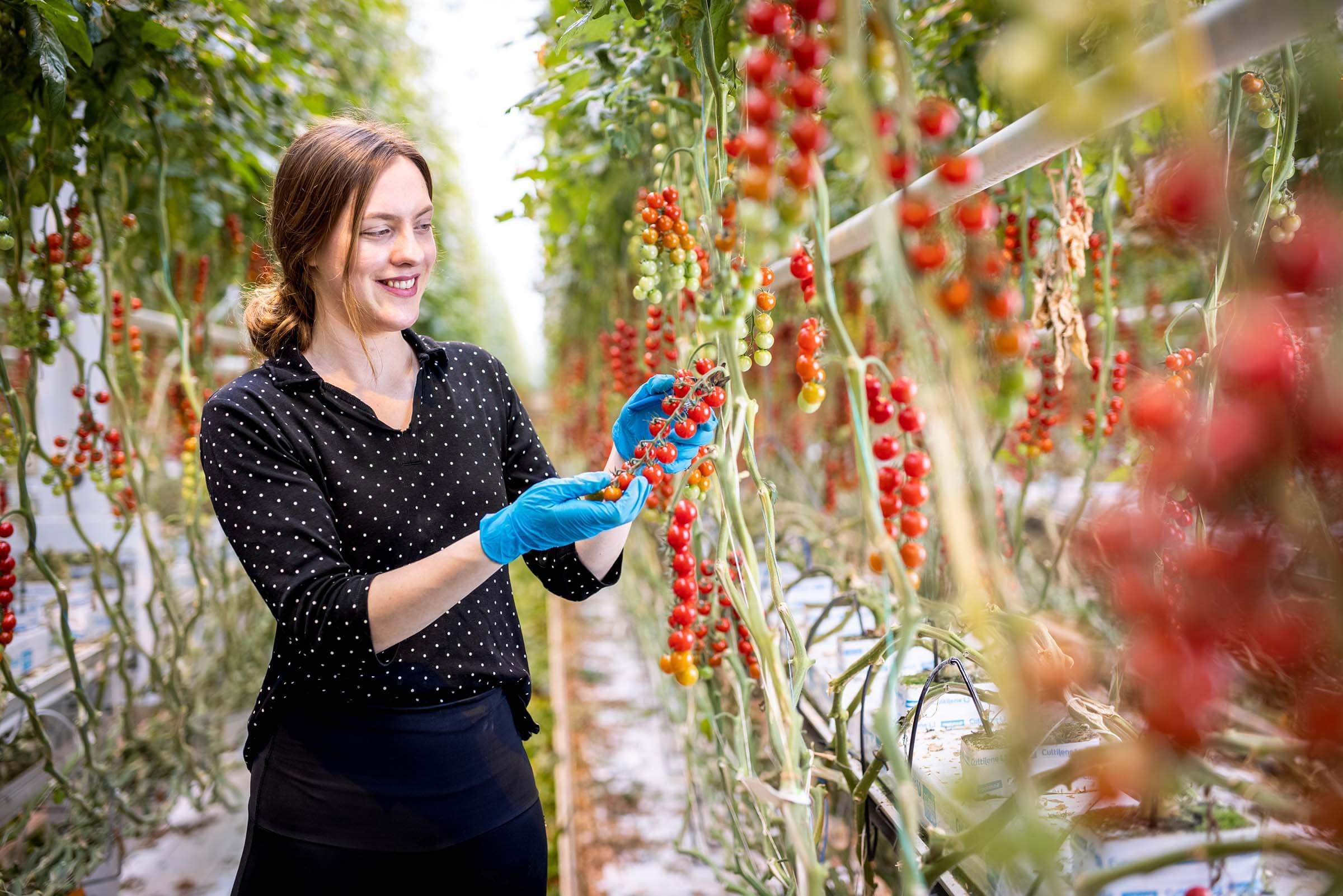 spikers werken in kassen tuinbouw